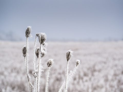 Why Cold Winters are Vitally Important for a Plants Survival.